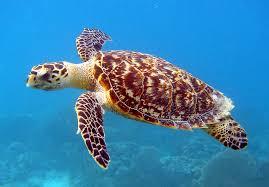 Sea Turtle Nests Thrive Along the Georgia Coast