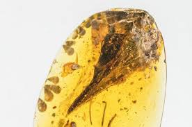 Smallest realized dinosaur found preserved in amber