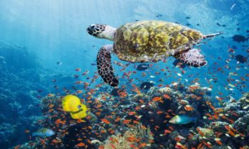 A 'social network' may have associated stable sea animals
